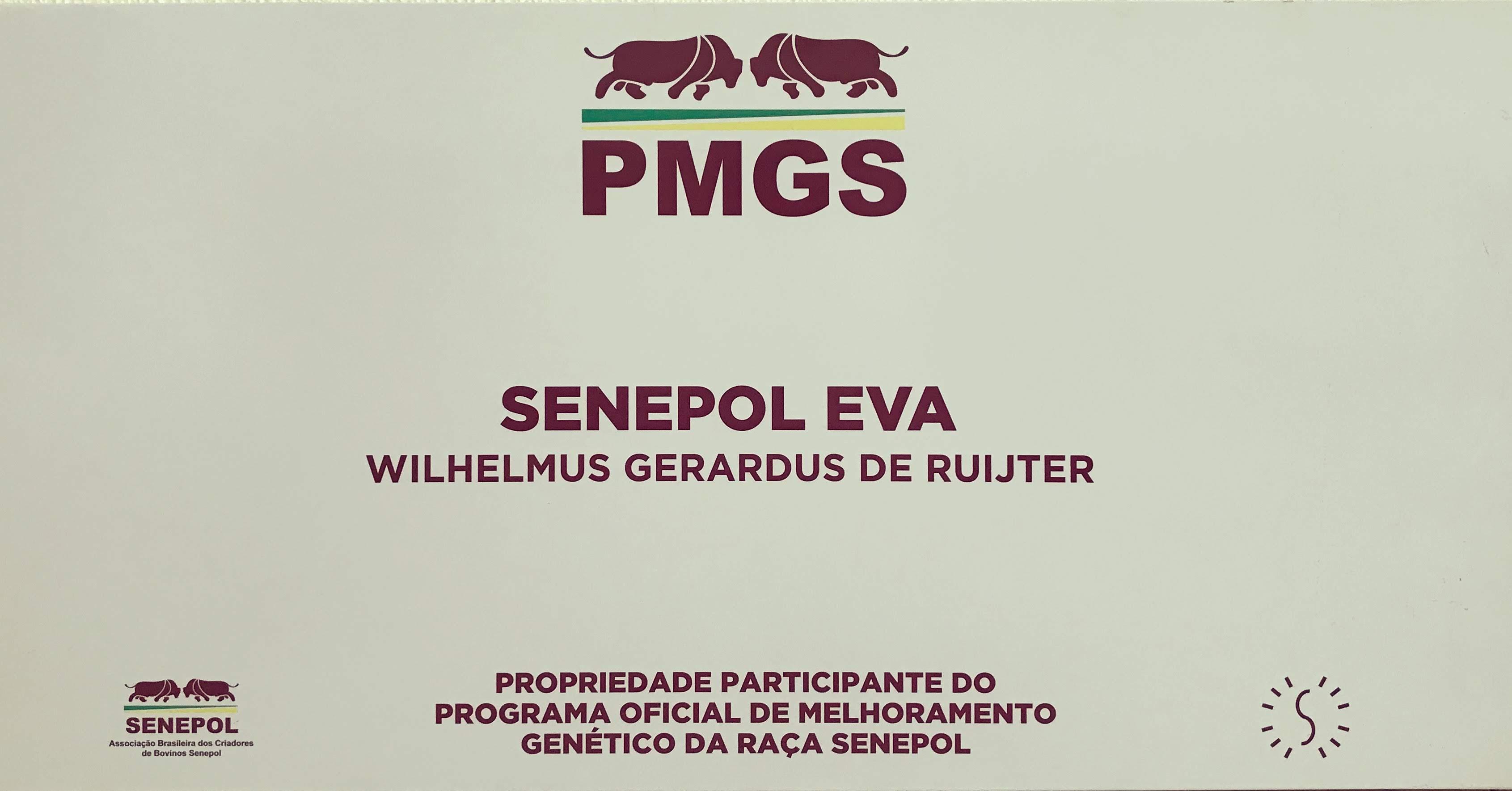 Programa oficial de melhoramento genético da raça senepol (PMGS)